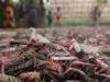أسراب الجراد تغزو إثيوبيا وسط أمطار غزيرة وقيود كورونا