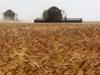 زراعة ديالى تسوق اكثر من 99 الف طن من محصولي الحنطة والشعير